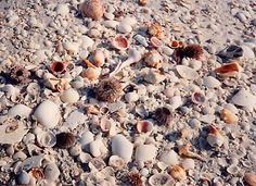 Sanibel Island and Captiva Island (Florida)...shelling heaven. :)