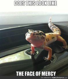 Please mr. Lizard have mercy
