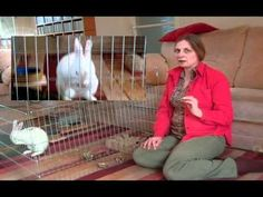 'What is a rabbit.' with Dr Anne McBride Rabbit Information, Animals, Animales, Animaux, Animal, Animais