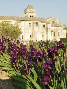 Les iris du monastère de Saint-Paul-de-Mausole - Saint-Rémy-de-Provence, Vaucluse (France)