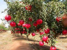 Pomegranate or Grenadine...delicious!