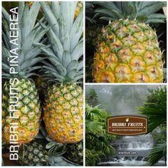 Bribrifruits piñas aéreas Costa Rica Piñas ,pineapples ,ananas de Costa Rica ,frutas tropicales ,fruits ,mercabarna ,piñasdecostarica, mercamadrid@bribrifruitscostarica #piñas #pineapple #pineapples #ananas #frutastropicales #dieta #nutricion #salud #costarica #caribe #puravida #instanfood #piñasdecostarica #fruterias #mercados #mercamadrid #mercabarna #mercasevilla #spain #bribrifruits #disfrutadelapiña