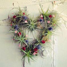Heart wreath air plant tillandsia