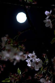 Midnight Garden:  In the #Midnight #Garden.