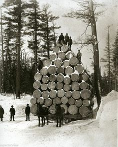 Michigan Greatest Logging. Photo Worlds Fair, Load Of Logs 1893 Chicago .. AMAZING