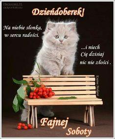 Cats, Animals, Good Morning, Gatos, Animales, Animaux, Animal, Cat, Animais