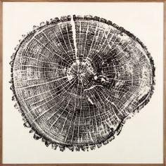 Wood Cross Section | Natural Curiosities #art #walldecor