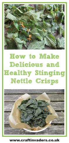 Today I am sharing my latest favourite way of eating nettles in this simple, delicious rand incredibly healthy recipe for Stinging Nettle Crisps! Informations About How to Make Delicious, Healthy Stinging Nettle Crisps Healthy Snacks To Make, Healthy Recipes, Healthy Eats, Nettle Recipes, Edible Wild Plants, Herbs For Health, Edible Food, Dehydrated Food, Wild Edibles