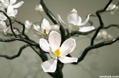 Before front of my house there was magnolia tree.