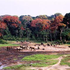 ©Karin von Loebenstein - Cameroon - Central African Republic - Congo - Sangha Trinational