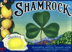 Items similar to Shamrock Vintage Crate Label Sunkist Lemons Orange County California Ireland New Old Stock on Etsy California Dates, Orange County California, Vegetable Crates, Vintage Crates, Fruit Packaging, Vintage Labels, Vintage Advertisements, Vintage Stuff, Vintage Food