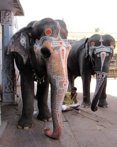 Temple Elephants: no description Asian Elephant, Elephant Love, Indian Elephant Tattoos, Elephant Images, Elephant Photography, Animal Photography, Animals Beautiful, Cute Animals, Spiritual Animal