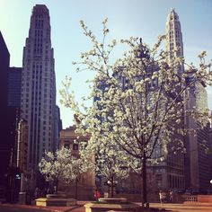 Spring on the Magnificent Mile