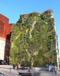 Über diesen vertikalen Garten sind wir in Madrid gestolpert. Das war der Anlas uns mit dem Konzept der vertikalen Gärten zu beschäftigen