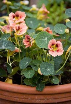 Plants of Distinction Tropical Garden Outdoor Plants, Garden Plants, Beautiful Gardens, Beautiful Flowers, Back Gardens, Tropical Garden, Dream Garden, Horticulture, Edible Garden