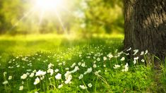 Spring | Best HD Wallpapers
