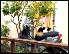 Kitty on a Moto Barcelona, Kitty, Cats, Decor, Little Kitty, Gatos, Decoration, Kitty Cats, Barcelona Spain
