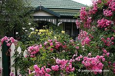 Cottages crave roses.