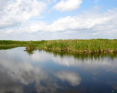 The Everglades in Florida swamp. clouds. reflection . grass. nature.