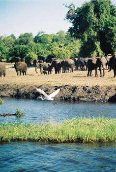 Chobe National Park . Botswana
