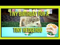 Tiny Birthday For A Tiny Hedgehog - Get through your hump day with this precious little hedgehog and her tiny friends.