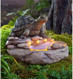 Your feathered friends will be extremely impressed with this Turtle Birdbath with Solar Lights. Powered by a discreet solar panel, this stonelike resin turtle birdbath features three golden LED lights and a shallow pool, perfect for taking quick dips. Russian Tortoise, Cute Turtles, Sea Turtles, Carapace, Turtle Love, Turtle Ring, Tortoises, Perfect World, Bird Houses