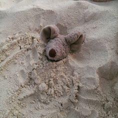 """""""Humor op het strand! Omdat ik niet stil kon blijven liggen... #muis #muisopreis #fotografie #arubagreetz #vakantie #mooiedag #warm #zon"""""""