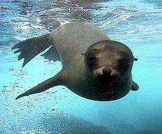 Swam with a sea lion