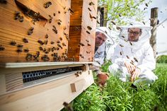 Dirk Zimmermann (right), Greenpeace campaigner for sustainable agriculture, and beekeeper Dr. Simon Bach with pollen collecting box.  The pollen is trapped when the bees enter the beehive.  Photographer: Fred Dott / Greenpeace