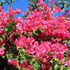 10 καλοκαιρινά λουλούδια που κλέβουν την παράσταση! Accounting, Plants, Planters, Plant, Planting