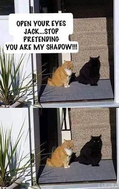 Stop pretending to be my shadow cat - cute animals - # . - Stop pretending to be my shadow cat – cute animals – # Listen - Funny Animal Jokes, Funny Dog Memes, Crazy Funny Memes, Funny Animal Videos, Cute Funny Animals, Cat Memes, Haha Funny, Silly Jokes, Funny Cat Pics