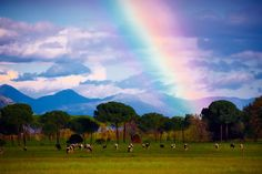 Ten Rainbows to Make You Happy After a Storm - The Cut