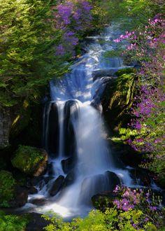 Azalea and Falls, Nikko, Tochigi, Japan