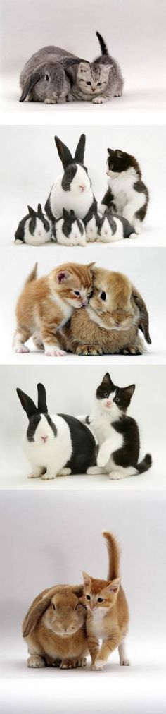 Cats and Rabbits - my 2 faves