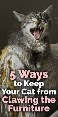 You love your cat, but you also really enjoy the nice new furniture that you spent a fortune on! Keeping cats from clawing at your leather lounge chair or nice microsuede sofa can create a problem in any home. Fortunately, we have solutions to keep your cats from destroying furniture without declawing your cat.