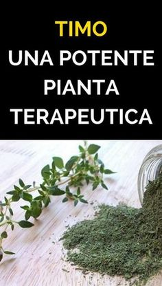 Timo: una potente pianta terapeutica Home Remedies, Natural Remedies, Healthy Lifestyle Tips, Healthy Recipes, Healthy Cooking, Calendula, Medicinal Plants, Kraut, Health And Wellbeing