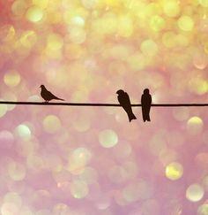 Birds. Silhouettes. Bokeh.