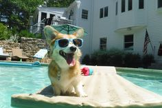"knivesthecorgi: ""little ladybabies too cool for you. """