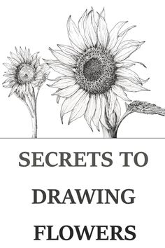 Tutorial for drawing your favorite flower using fineliners & technical pens. Easy step by step guide for beginners and advanced artists. drawings flowers How to Draw Flowers with Pen & Ink Flower Art Drawing, Flower Drawing Tutorials, Sunflower Drawing, Flower Sketches, Watercolour Tutorials, Drawing Sketches, Painting & Drawing, Art Drawings, Sketching