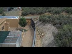 Building a Commercial Dog Boarding Kennel: part three - YouTube