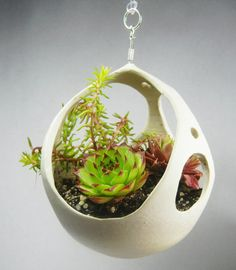 PeekaBoo Hanging Planter with Succulents by Kamspots on Etsy, $50.00