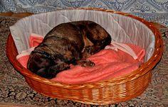 Oskar ist wieder zu Hause.  ...  Ob er da auch so schön träumt wie in seinen Ferien bei mir. Bestimmt. Und danach wieder in den Wald zur Gassirunde. Hund müsste man sein. :-)