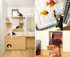 SORRY - MY FIRST ATTEMPT AT THIS PIN COULDN'T ACCESS THE WEBSITE - MY FAULT, I GUESS. |||  These Japanese Homes are Pet Playgrounds - [ I'm cat people, but these people have homes actually designed around their cats (& dogs too if you prefer). Click through to see more pix. - PSC]
