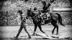 MorningDaily 144 | http://jhpv.co/1ui00XN #Animals, #DSLR, #Kaipara, #MorningDaily, #NewZealand, #Paparoa  See me - http://jhpv.co/JHPVSite Own me - http://jhpv.co/JHPVStore