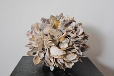 Stunning Oyster Shell Ball  8 to 10 inches  Natural from the