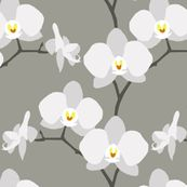 Spoonflower beauty, love white orchids
