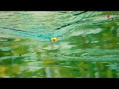 CASTING GABUS SAWAH SAAT MUSIM HUJAN || ULTRALIGHT FISHING - YouTube Fishing Videos, Fishing Lures, It Cast, Waves, Youtube, Painting, Outdoor, Fishing Jig, Outdoors