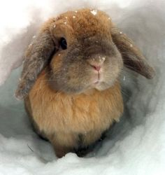Cuddle this Rabbit and Keep it Warm