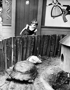 Black & White (denisebefore: Bronx Zoo; the tortoise and the...)