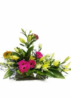 Gauteng Central Flower & Gift Delivery for all occasions. Secretary's Day, Birthday, Happy, Modern, Flowers, Plants, Gifts, Birthdays, Trendy Tree